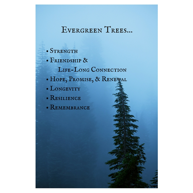 Evergreen Natures Path